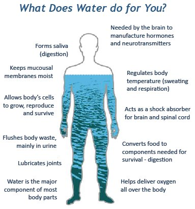 water – more than an element | in our care - home care services, Muscles
